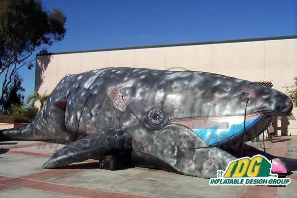 Final Whale Side 1