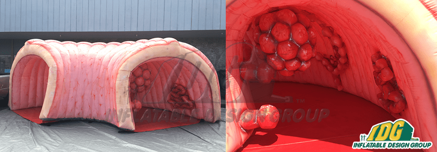 inflatable medical exhibits